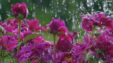 Rain-Desktop-Wallpapers-040